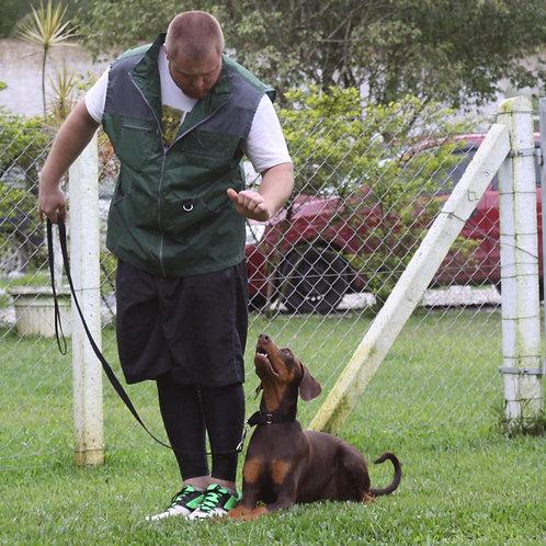 Pacote de Adestramento - Obediência básica