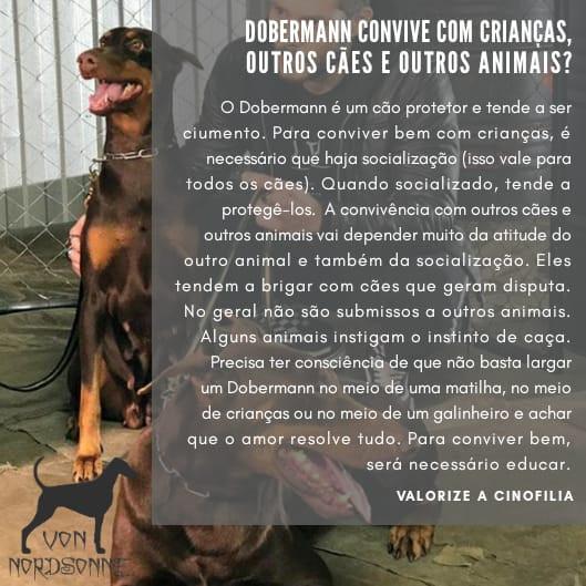 Dobermann com crianças e outros animais