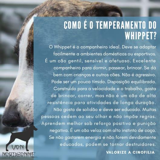 temperamento whippet