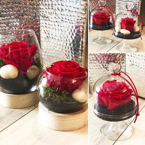 Rose éternelle , présentoir en verre