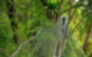 Poring-Canopy-Walkway_edited.jpg