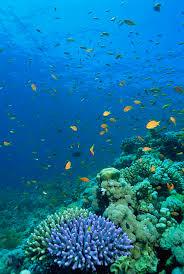 Maliangin Snorkeling