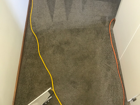 What's lurking in your carpet?