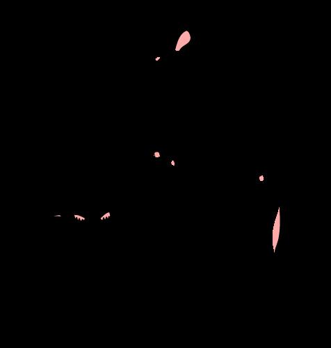 fll-logopink-2