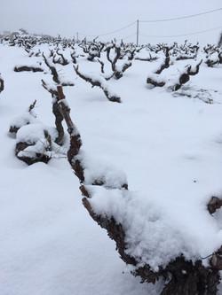 cep sous la neige