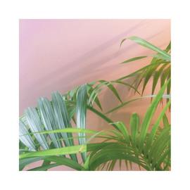 Plants on pink.