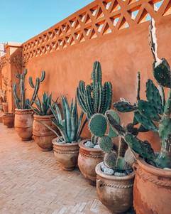 cactus morocco.jpg
