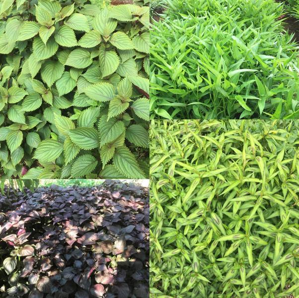 Fresh Organic Herbs and Veggies
