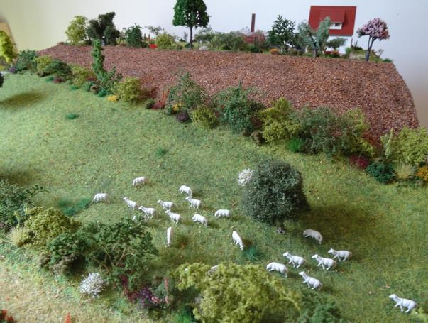 Blocs_diagrammes_Agro-écologie_(2).JPG