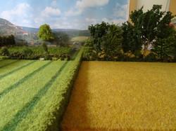 La place de l'arbre en milieu rural - Effet brise-vent et agroforesterie (3)