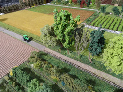 Maquette agroforesterie