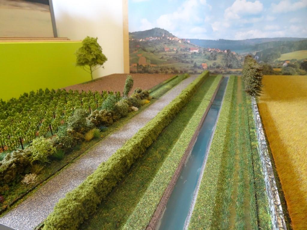 La place de l'arbre en milieu rural - Effet brise-vent et agroforesterie (5)