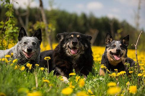 Hundetraining-1024x682.jpg