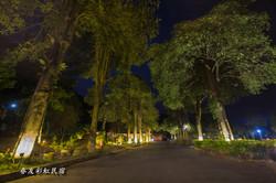 林蔭大道夜景