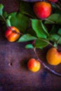 apricot tree cultivars
