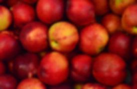 nectarine tree cultivars