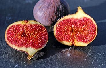 fig tree cultivars