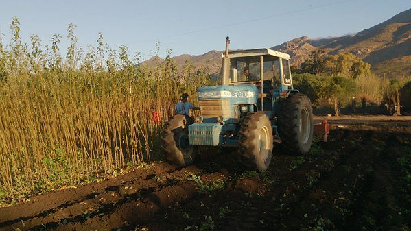 plowing fields for planting new fruit trees