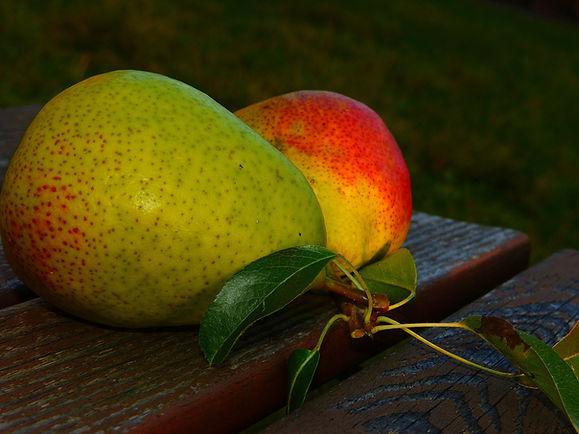 pear tree cultivars