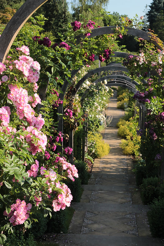 Ethno Flora Garden Roses Maintenance