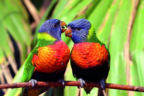 Parc des oiseaux.jpg