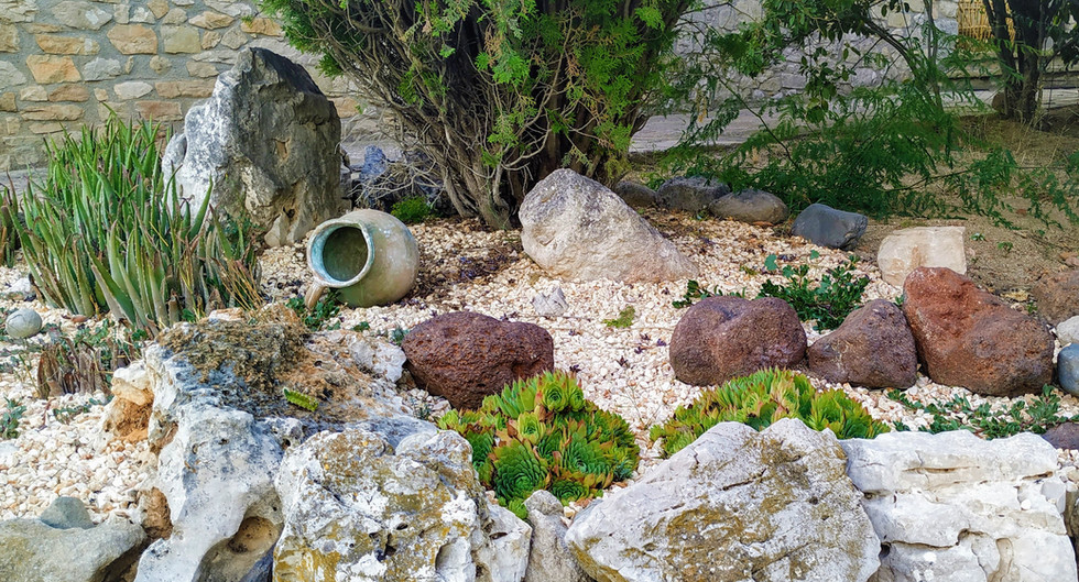 Detalle zona cactus y aloe vera