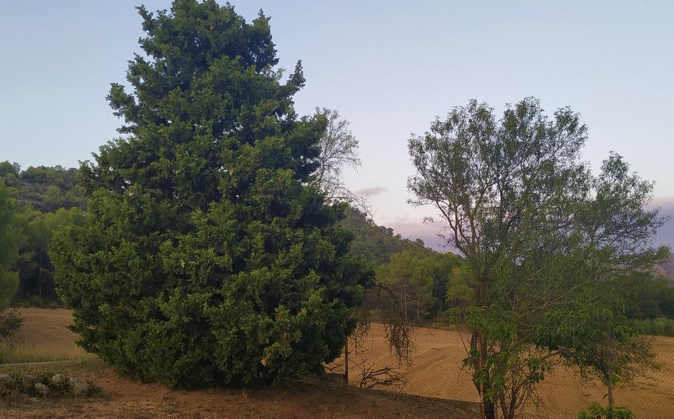 Arboles jardin