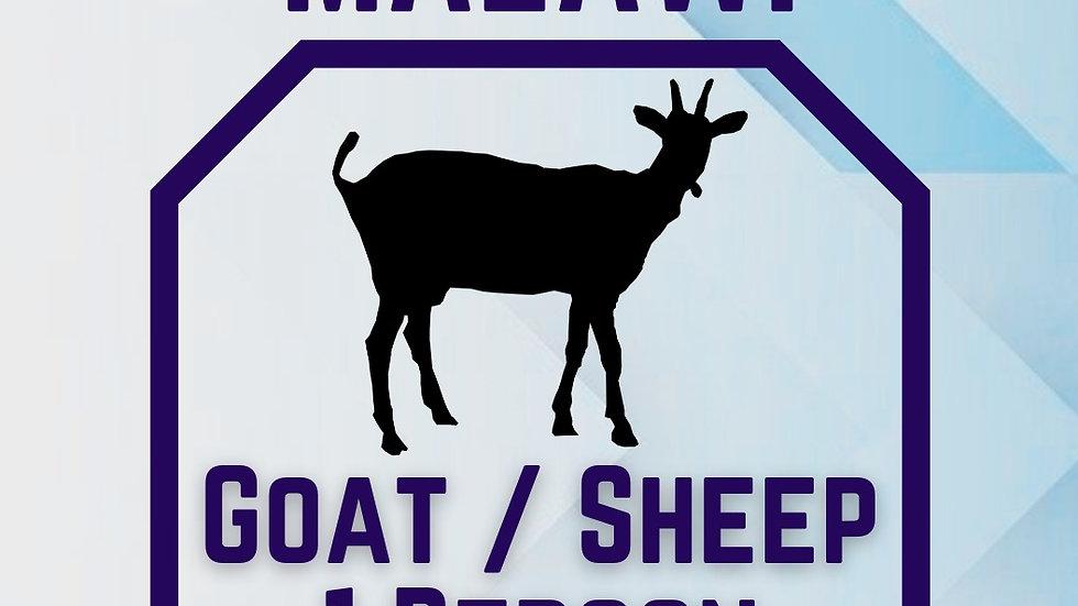 QURBANI  GOAT / SHEEP