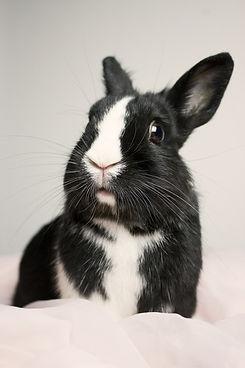 bunny-435170_1920.jpg