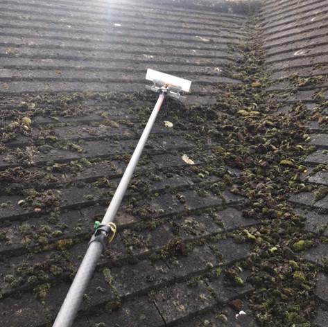 moss removal beckenham