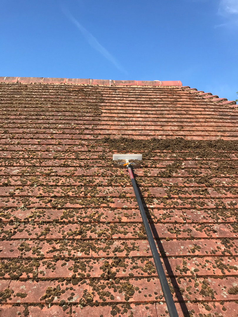 roof moss removal bromley