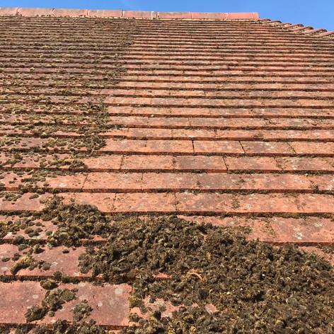 beckenham roof cleaner near me