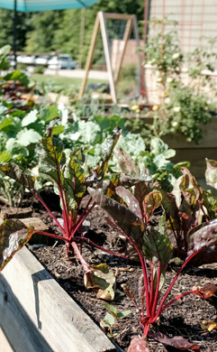 Vegetable Garden Installations