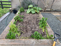 Replant of an existing garden