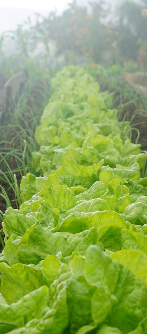 Vegetable Garden Maintenance