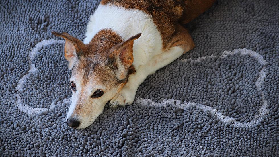 Soggy Doggy Mat