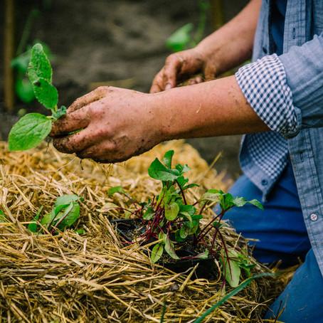 ¿Que podemos cultivar en casa?