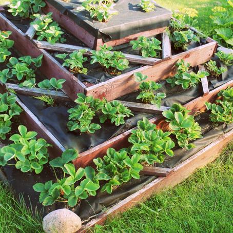 Que es la permacultura?