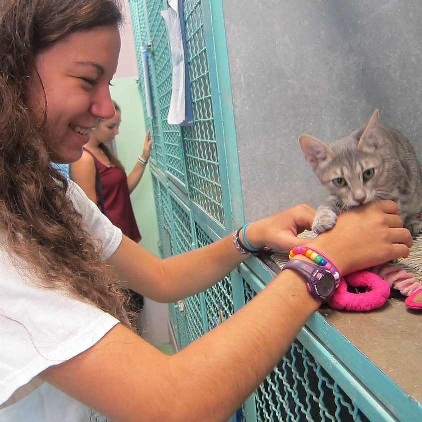Help out at an animal shelter
