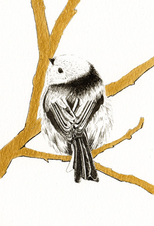 """""""Long Tailed Tit"""""""
