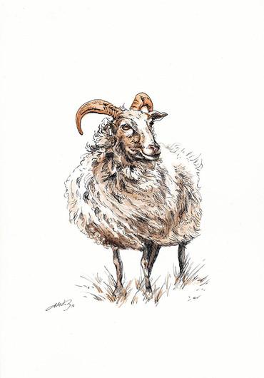 """""""Gute Ram"""""""
