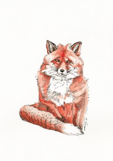"""Fox"""