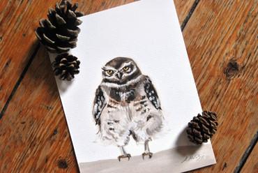 """""""Burrowing Owl"""""""