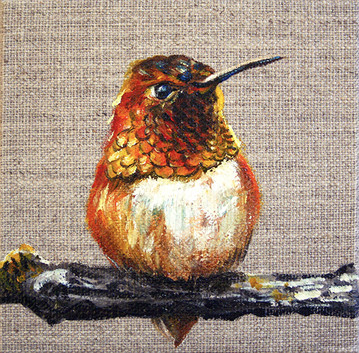 """Rufous Hummingbird"""