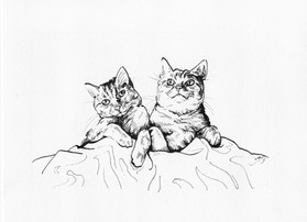 """""""Couple of Cats"""""""