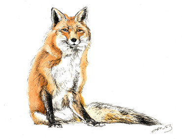 """Mrs. Fox"""