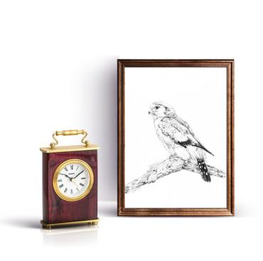 """Pygmy Falcon"""