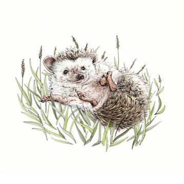 """Lying Hedgehog"""