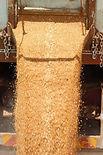 waterfall feedlot grain