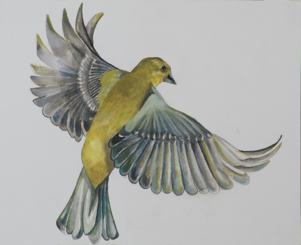 Green Finch in flight